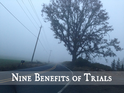 Benefits of trials - tree and road in the fog
