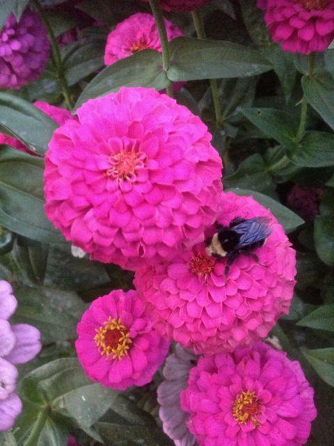 Honeybee092314No3